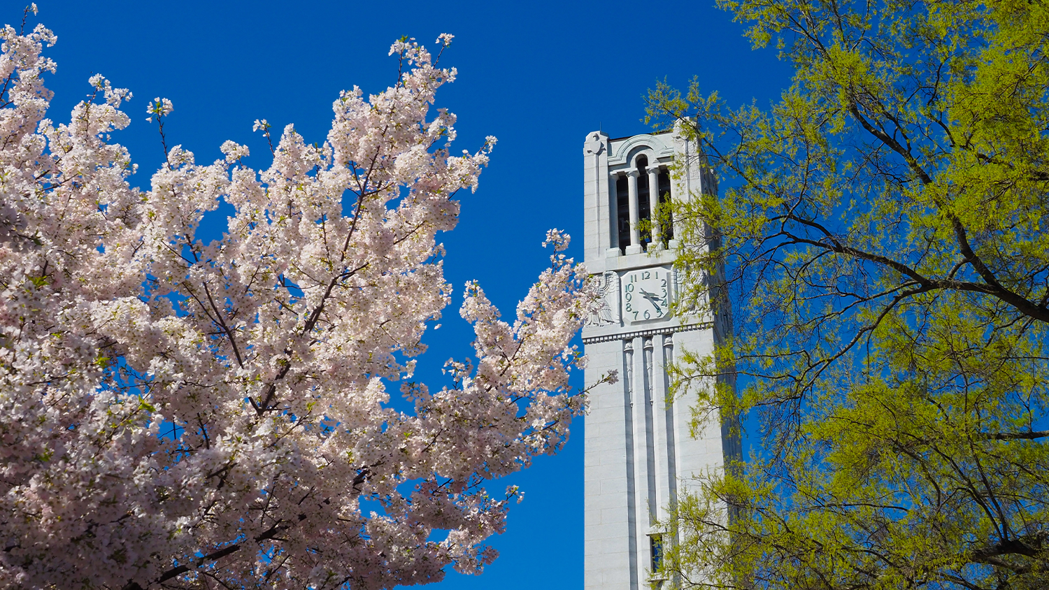 Pink spring flowers can be seen next to the belltower on a nice sunny spring day.